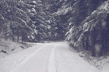 Forest road in winter 2