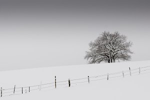 Fenced fields and trees in the snow