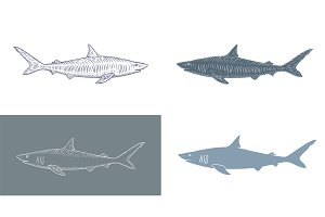 Set of Shark Vector Illustrations