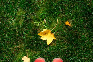high angle view of woman in red rubber boots on green grass full of autumn leaves