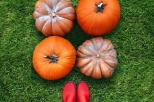 three orange pumpkins harvest lying on green grass flat lay womans view point