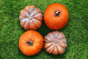 four orange pumpkins harvest lying on green grass flat lay high angle view
