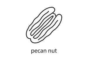 Pecan nut linear icon