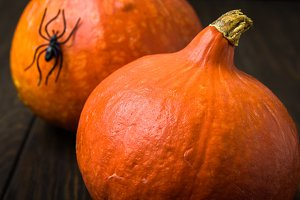 Pumpkins and spider