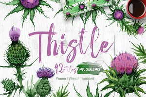 Thistle flowers PNG watercolor set