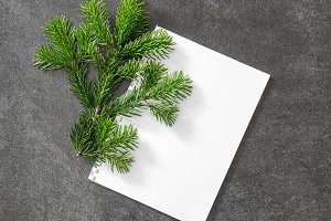 Christmas tree branch white paper