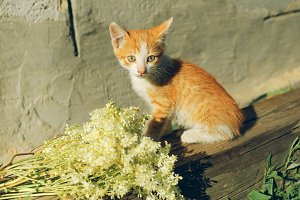 Red kitten beside bouquet of flowers