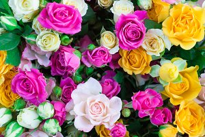 colorful roses with green leaves