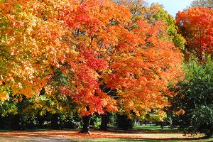 Gorgeous Autumn Trees