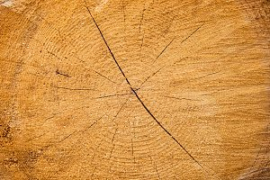 Yellow cracked wooden texture