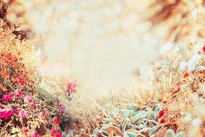 Autumn flowers garden, banner