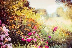 Flowers bed in garden
