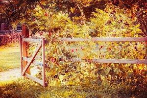 Fense and gate of garden