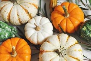 Pumpkins & Gourds Bunch