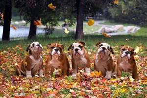Dogs in autumn park