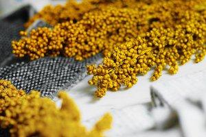 Harvest Textures (Yellow & Gray)