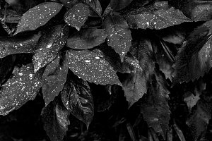 Black and White Plants Background