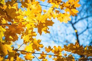 Autumn nature background