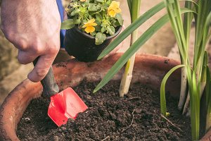 Hands planting flowers in a pot
