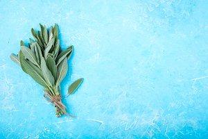 Fresh sage on blue background