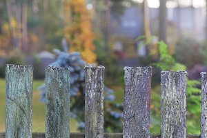 The old autumn fence boards in autumn