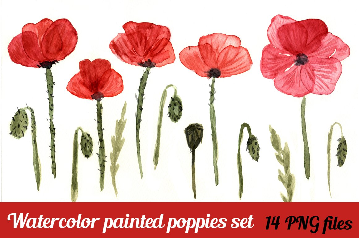 Watercolor red poppy flowers illustrations creative market mightylinksfo