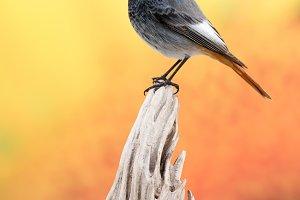Birds life