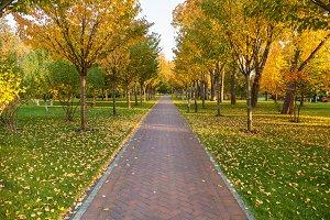 a footpath in an autumn park