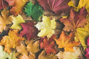 Fall background & texture
