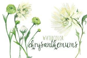 Watercolor Chrysanthemums & Dahlias