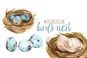 Watercolor Bird's Nest
