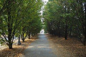 trees in Venaria