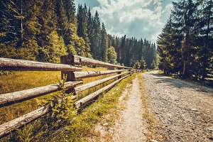 Hiking road with wooden fence in pine tree forest