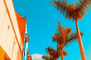 tropical minimal. Palms and Urban.