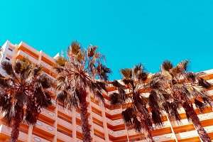 Palms background and hotel.