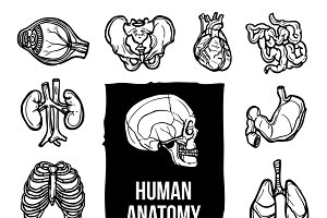 Human internal organs sketch icons