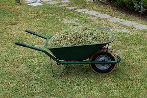 Wheelbarrow Cut Grass