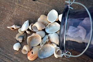 Shells on wooden board