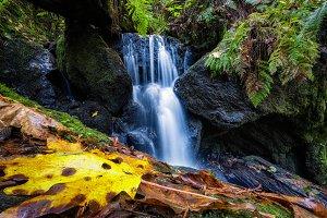 Beautiful Waterfall in a Rain Forest