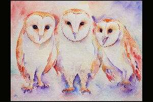 Watercolor Art Print Three Barn Owls