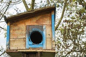 Colorful housebirds