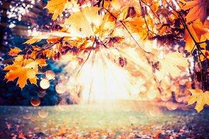 Autumn leaves in park , sunbeam