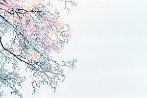 Winter frozen tree brunches