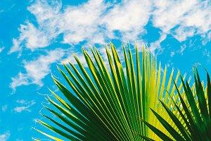Palm tree and blue sky. Tropical