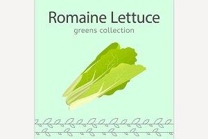 Romaine Lettuce Image