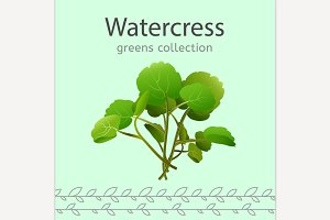 Watercress vector illustration