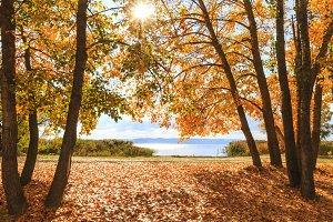 gorgeous autumn landscape with a river view