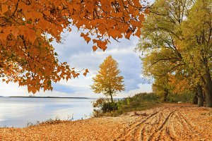 Autumn landscape - a lone tree on the river bank