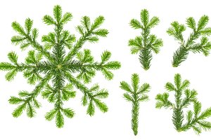 Christmas tree branches snowflake