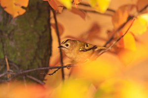 small bird among the autumn colors of the wild forest